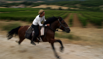Horse riding tours in the lavender fields of Haute Provence - Ride in France